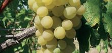 De bonnes idées à prendre sur ce site : offrir-du-vin.fr